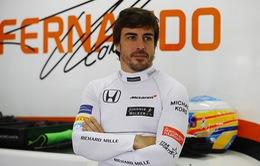 Người hâm mộ muốn Fernando Alonso trở lại F1