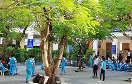 Chủ tịch Hà Nội yêu cầu cắt tỉa cây xanh trong trường học
