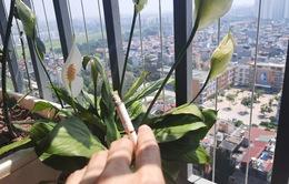Ở chung cư, hít phải khói thuốc lá từ ban công hàng xóm gây hại như thế nào?