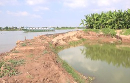 Đất cồn An Giang bị sạt lở vì khai thác cát trái phép