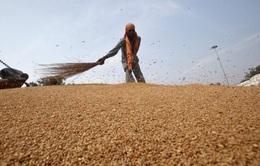 Hơn 40 triệu người Tây Phi đang có nguy cơ đối mặt với nạn đói