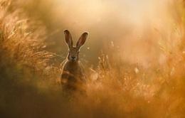 Chiêm ngưỡng tuyệt tác thiên nhiên hoang dã tại cuộc thi ảnh quốc tế