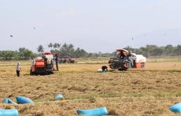Nông nghiệp chuẩn bị cho chiến lược tăng tốc