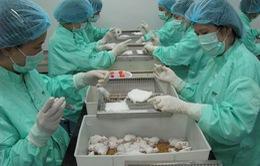 10 ngày sau tiêm vaccine ngừa COVID-19, 50 con chuột đều khỏe