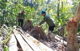Phú Yên: Điều tra các đối tượng ngang nhiên mở đường để phá rừng