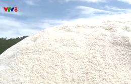Quảng Ngãi: Diêm dân khó khăn do giá muối bấp bênh