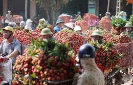 """Vải thiều được """"ưu ái"""" đặc biệt tại cửa khẩu Lào Cai"""