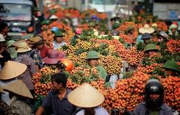 Vải thiều Bắc Giang tiếp tục tăng giá
