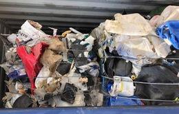 TP.HCM buộc 31 hãng tàu tái xuất hơn 1.000 container rác