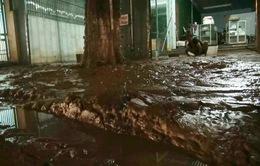 Nhà lún, tường nứt, tài sản ngập trong bùn đất từ công trình san lấp