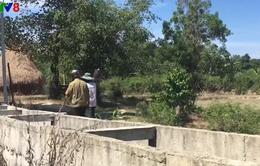 Hàng trăm hộ dân chịu hạn ngay cạnh hồ chứa nước Phú Ninh