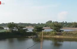 Cảnh báo môi trường nước vùng nuôi tôm ven biển Quảng Ngãi