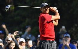 Tiger Woods sẽ không tham dự RBC Heritage 2020