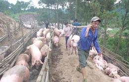Nhập lậu lợn diễn biến phức tạp, Bộ NN&PTNT đề nghị kiểm soát chặt