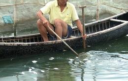 """""""Treo ao"""" hàng loạt ở vùng nuôi thủy sản, nhiều hộ nuôi đứng ngồi không yên"""