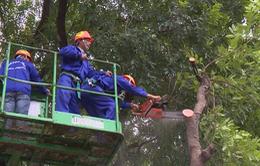 Muốn chặt, tỉa cây xanh trong trường học, bệnh viện phải làm đơn