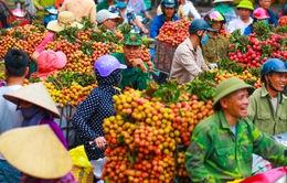 Lục Ngạn (Bắc Giang) mùa vải chín: Phiên chợ rực rỡ sắc đỏ