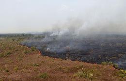 Cháy rừng ở Amazon có thể làm trầm trọng hơn tình hình bệnh nhân COVID-19