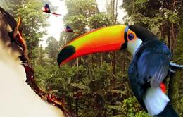 Những nguy cơ mới từ sự xuống cấp của rừng Amazon