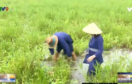Một ngày làm nông dân đi khẩn hoang