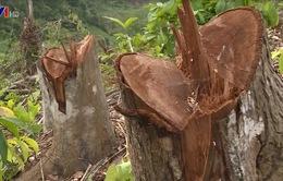 Khó khăn trong công tác quản lý, bảo vệ rừng: Giảm số phụ, tăng mức độ nghiêm trọng