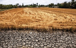 Hạn hán, xâm nhập mặn tại ĐBSCL nghiêm trọng hơn trong mùa khô tới