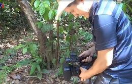 Khi phóng viên VTV tác nghiệp ở rừng già
