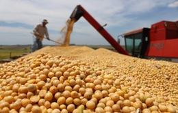 Trung Quốc tăng tốc mua nông sản Mỹ