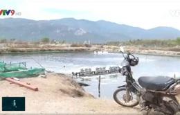 """Khánh Hòa: """"Treo ao"""" hàng loạt ở vùng nuôi thủy sản"""