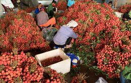 """Vải thiều Việt Nam: """"Tấn công"""" thị trường ngoại, chinh phục thị trường nội"""