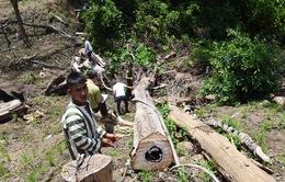 Bắt khẩn cấp 7 đối tượng liên quan đến vụ phá rừng tại Gia Lai