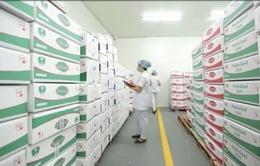 Công ty Cổ phần Sữa Hà Lan - Sản phẩm tạo nên thương hiệu