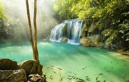 Bảo tồn thiên nhiên, Thái Lan đóng cửa công viên 133 quốc gia