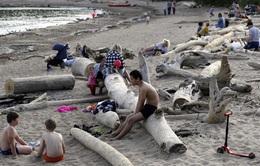 Báo động: Bắc Cực đang nóng lên nhanh gấp đôi phần còn lại của thế giới