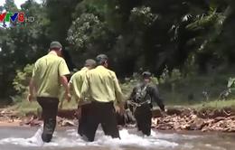 Quảng Nam cải tổ toàn bộ lực lượng bảo vệ rừng