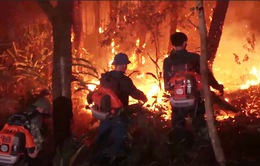 Khởi tố hình sự và xử lý hành chính 8 vụ cháy rừng