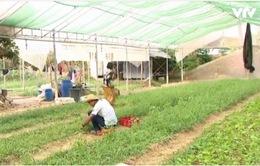 WB thông qua khoản tín dụng 93 triệu USD hỗ trợ chương trình cấp đất ở Campuchia