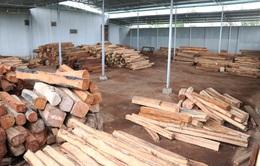 Phát hiện vụ vận chuyển, tàng trữ gỗ trái phép quy mô lớn ở Gia Lai