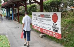 Dịch sốt xuất huyết bùng phát mạnh tại Singapore