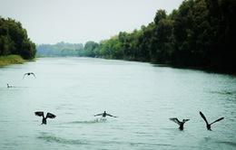 Đẩy mạnh bảo tồn đa dạng sinh học tại các vùng đất ngập nước