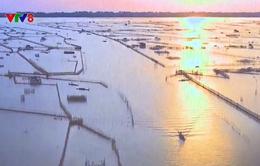 Thành lập khu bảo tồn thiên nhiên Tam Giang - Cầu Hai