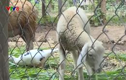 Chuyển dịch cơ cấu cây trồng, vật nuôi tại Kon Pne