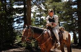 Các đội kỵ binh trên thế giới đang hoạt động như thế nào?