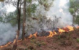 Nghệ An: Cháy rừng thông và keo ở xã Diễn Lộc lan rộng