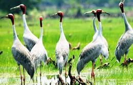 Vì sao chim, cá, rùa, rắn dần biến mất ở Vườn quốc gia Tràm Chim?