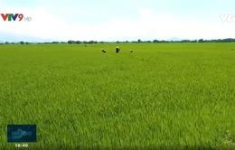 Ninh Thuận: Canh tác vùng khô hạn - giãn vụ để tăng thu nhập