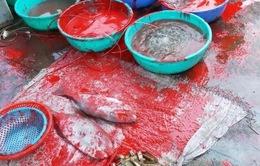 """Bắt nhóm đối tượng đòi nợ """"khủng bố"""" bằng sơn, chất bẩn tại Nha Trang"""