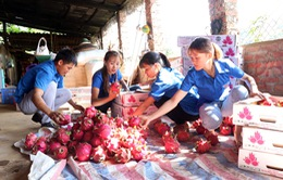 10 tấn thanh long Việt lên đường chinh phục thị trường Nga