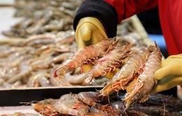 Trung Quốc phát hiện nhiều mẫu chứa virus SARS-CoV-2 tại một doanh nghiệp thủy sản