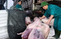 Thái Lan giảm xuất khẩu thịt lợn